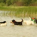 Zlot labradorów wiosna 2012r.