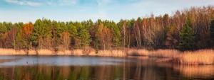 Skraj lasu odbity w jeziorze